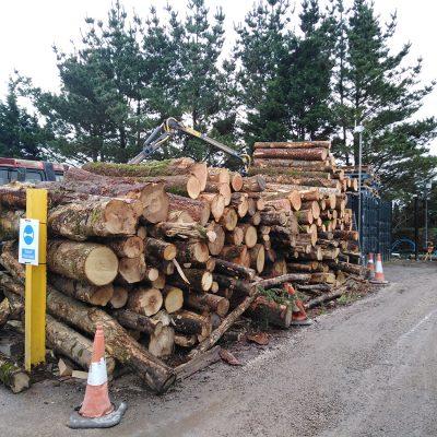 Log Pile in the yard